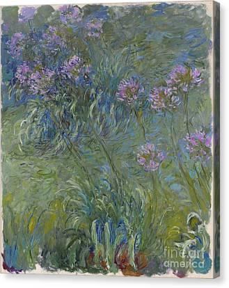 Agapanthus Canvas Print - Agapanthus Flowers 1914-17 by Claude Monet