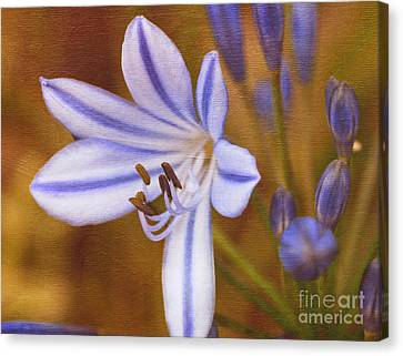 Agapanthus In Painting Canvas Print by Irina Wardas