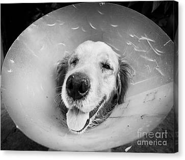 Agape Dog With Funnel Canvas Print