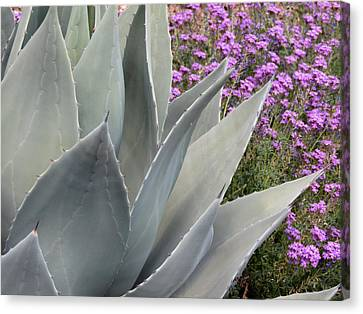 Agave And Flowers Canvas Print