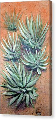 Agave Canvas Print by Kenny Henson