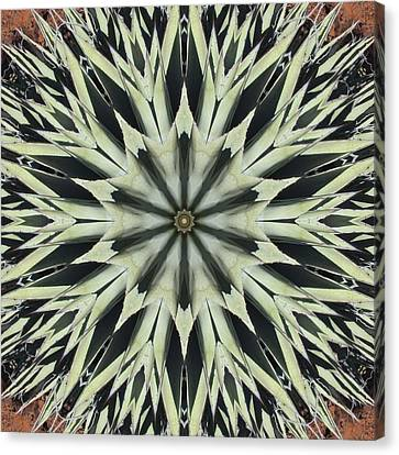 Canvas Print featuring the digital art Agave Star by Trina Stephenson