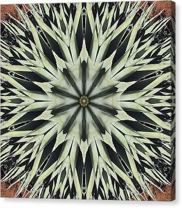 Agave Star Canvas Print by Trina Stephenson