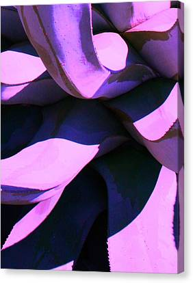 Agave Canvas Print by Steve Godleski