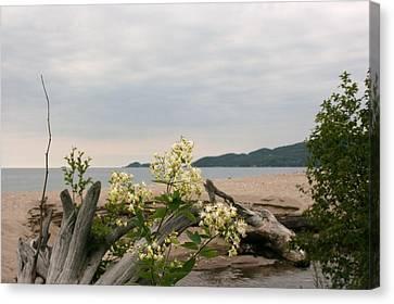 Canvas Print featuring the photograph Agawa Bay by Paula Brown