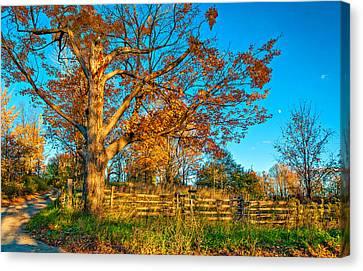 Split Rail Fence Canvas Print - Aged Beauty 2 by Steve Harrington