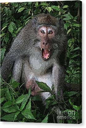 Aggressive Monkey From Bali Canvas Print by Sergey Lukashin