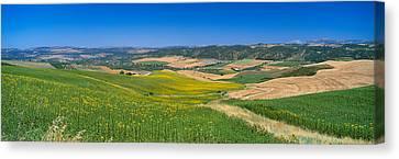 Agricultural Fields, Ronda, Malaga Canvas Print