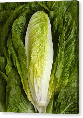 Romaine Canvas Print - Agriculture - Closeup Of A Romaine by Ed Young