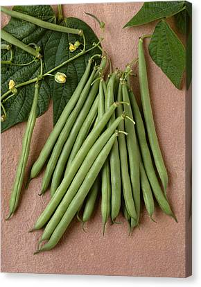 Agriculture - Green Beans On Stone Canvas Print by Ed Young
