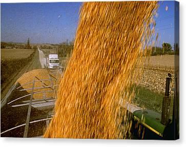 Agriculture - Harvested Grain Corn Canvas Print by R. Hamilton Smith