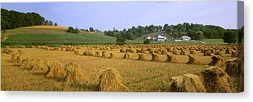 Agriculture - Harvested Oats In Shocks Canvas Print by Timothy Hearsum