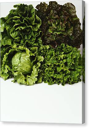 Agriculture - Heads Of Romaine, Red Canvas Print by Ed Young