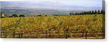 Agriculture - Hillside Wine Grape Canvas Print by Timothy Hearsum