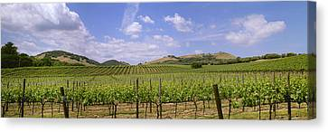 Agriculture - Rolling Hillside Wine Canvas Print by Timothy Hearsum
