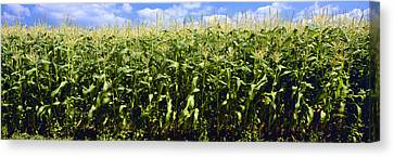 Agriculture - Sideview Of A Stand Canvas Print by Charles Blakeslee