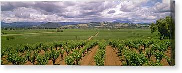 Agriculture - Wine Grape Vineyards Canvas Print by Timothy Hearsum