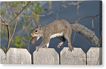 Ahhh Nuts Canvas Print by D Wallace