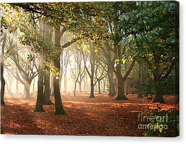 Canvas Print featuring the photograph Air Autumn by Boon Mee