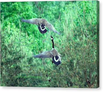 Air Fight Canvas Print by Lorna Rogers Photography
