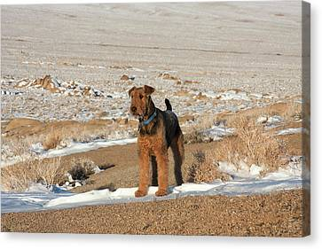 Courage Canvas Print - Airedale Terrier Standing In Alabama by Zandria Muench Beraldo