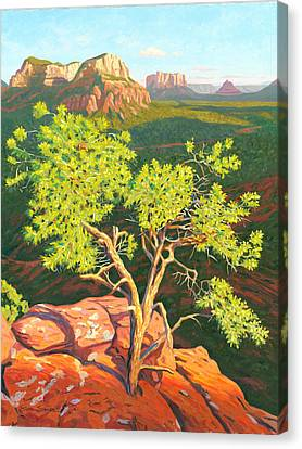 Airport Mesa Vortex - Sedona Canvas Print by Steve Simon
