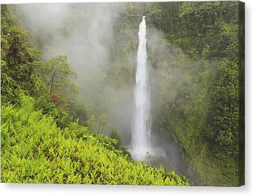 Akaka Falls Akaka Falls State Park Canvas Print by Stuart Westmorland