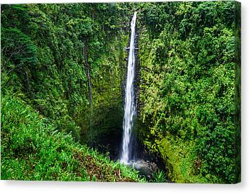 Canvas Print featuring the photograph Big Island - Akaka Falls by Francesco Emanuele Carucci