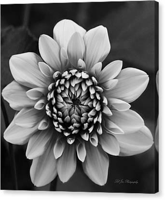 Ala Mode Dahlia In Black And White Canvas Print