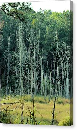 Alabama Autumn Marsh Canvas Print by Maria Urso