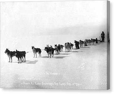 Malamute Canvas Print - Alaska Champion Dog Sled Team 1914 by Daniel Hagerman
