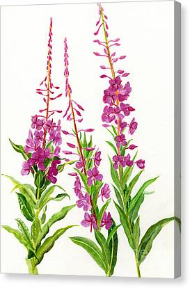 Alaska Fireweed Canvas Print by Sharon Freeman