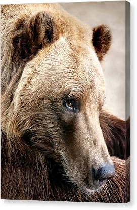 Alaskan Brown Bear Canvas Print by Jim Hughes
