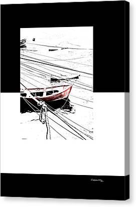 Albatros Canvas Print by Xoanxo Cespon