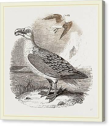 Albatross Canvas Print by Litz Collection