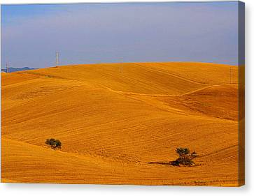 Trees In The Wheat Field Canvas Print