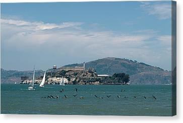 Alcatraz With Pelicans Canvas Print
