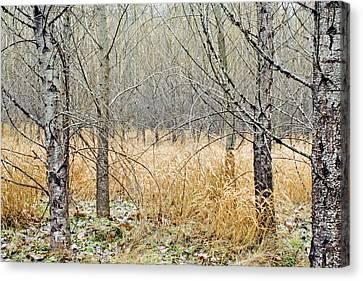 Alder Grove Canvas Print by Claude Dalley