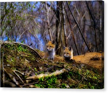 Fox Kit Canvas Print - Alert Cute Kit Foxes by Thomas Young