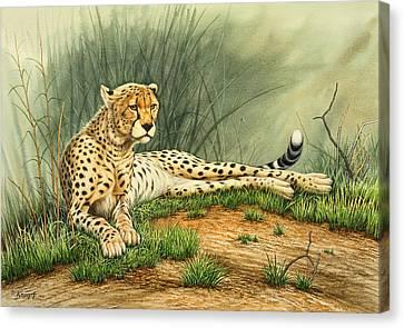 Alert Repose  - Cheetah Canvas Print by Paul Krapf