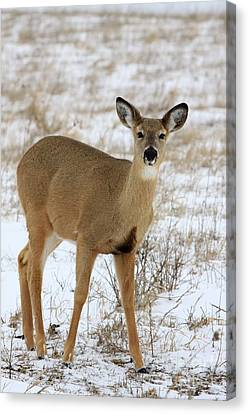 Alert Canvas Print by Rick Rauzi