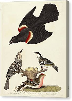 Alexander Lawson After Alexander Wilson, Red-winged Canvas Print by Quint Lox