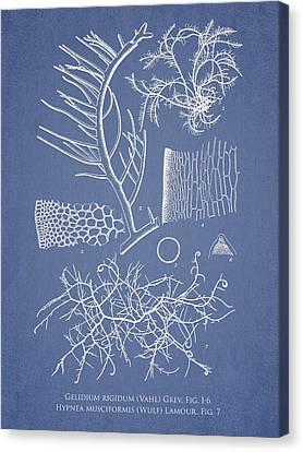 Alga Canvas Print - Algae by Aged Pixel