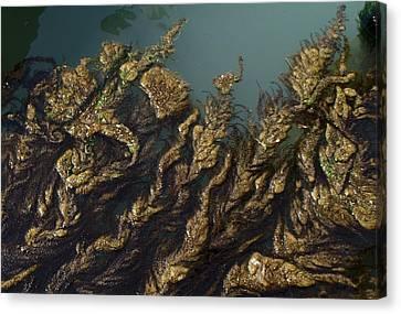 Canvas Print featuring the digital art Algae by Ron Harpham
