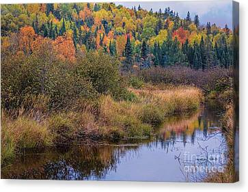 Branch Hill Pond Canvas Print - Algonquin Autumn Wetland by Henry Kowalski