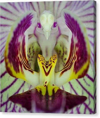 Canvas Print featuring the photograph Alien Bird Flower by Kevin Munro