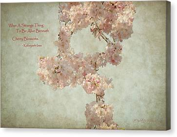 Alive Beneath Cherry Blossoms Canvas Print by Paulette B Wright