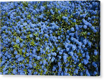 All Blue Canvas Print by Svetlana Sewell