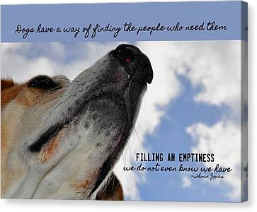All Dogs Go To Heaven Quote Canvas Print by JAMART Photography