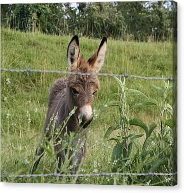 All Ears Canvas Print by Terry Scrivner